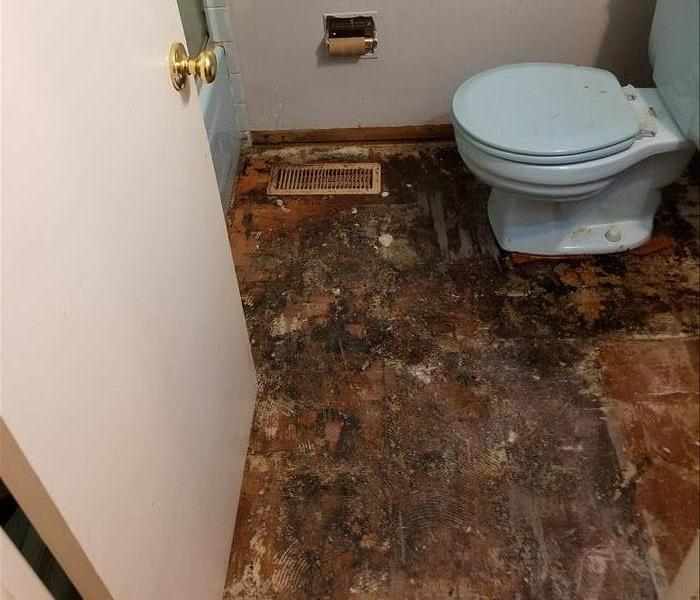 Water damage to mold After